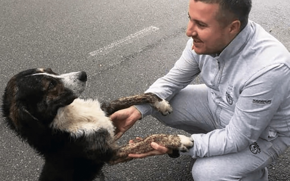 stray dog keeps injured biker warm