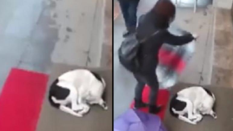 Woman's heartwarming gesture for cold, stray dog - video